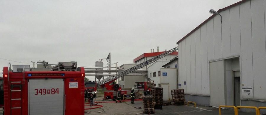 Pożar hali produkcyjnej browaru w Piotrkowie Trybunalskim - informujecie nas na Gorącą Linię RMF FM. Jak udało się nam ustalić, ogień jest już ugaszony.