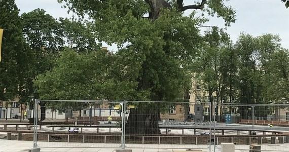 Lublinianie mają ostatnią szansę, żeby zrobić sobie zdjęcie z topolą czarną, zwaną Baobabem, na Placu Litewskim. Leciwe, około 120-130 letnie drzewo - jeden z symboli miasta - będzie jutro wycięte. Operację zaplanowano na 6 rano.