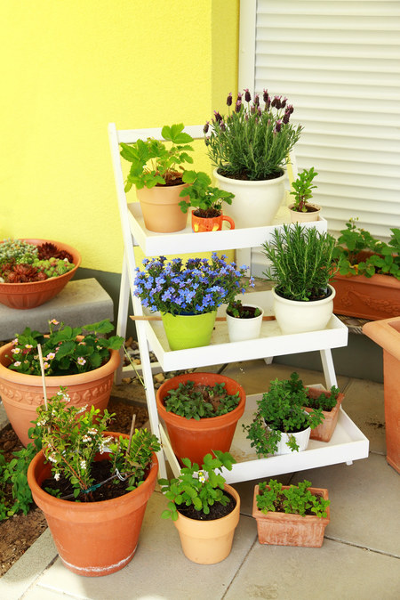 Jakie Rośliny Na Balkon W Bloku Forum Mobilna Interiapl