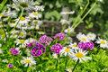 Hortiterapia, czyli lecznicza moc ogrodów