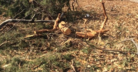 Prezydent Andrzej Duda podpisał nowelę ustawy o ochronie przyrody. Zaostrza ona obowiązujące od początku roku liberalne prawo dot. wycinki drzew na prywatnych gruntach. W pewnych przypadkach, by wyciąć drzewo trzeba będzie wcześniej uzyskać zgodę w gminie.
