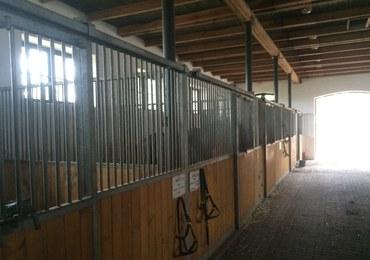 Sprawa hodowli koni w Janowie i Michałowie. Sąd: Annę Stojanowską zwolniono bez powodu