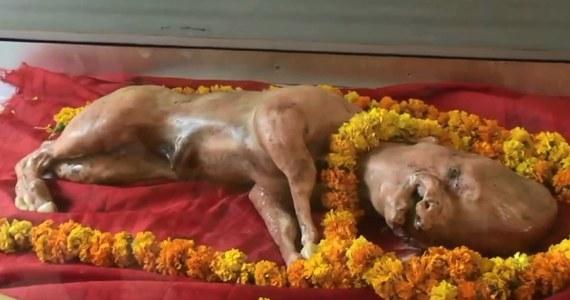 W Muzaffarnagar, na południ Indii, urodziło się cielę o rysach ludzkiej twarzy. Zwierzę padło niedługo po urodzeniu. Okoliczni mieszkańcy uważają, że cielę było wcieleniem jednego z bogów. Ciało cielaka zostanie niedługo spalone. Miejscowi chcą zbudować świątynię na jego cześć.