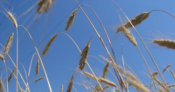 """""""Jesteśmy przeciwni kolejnemu zwiększaniu bezcłowych kontyngentów na artykuły rolne z Ukrainy"""" - powiedział Wiktor Szmulewicz, prezes Krajowej Rady Izb Rolniczych (KRIR) w rozmowie z korespondentką RMF FM w Brukseli."""