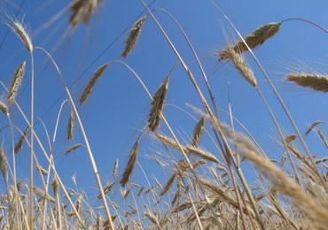 Bezcłowe kontyngenty na artykuły rolne z Ukrainy destabilizują rynek?