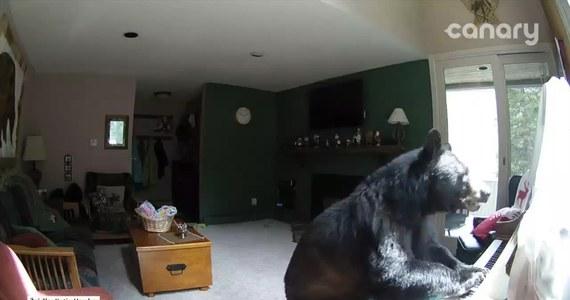 """Mieszkańcy tego domu w miejscowości Veil w Stanach Zjednocznych byli w szoku, kiedy zobaczyli nagranie z kamery przemysłowej zainstalowanej w ich domu. Na filmiku widać, jak do domu włamuje się niedźwiedź, buszuje wewnątrz, a w pewnym momencie """"dobiera się"""" do pianina."""