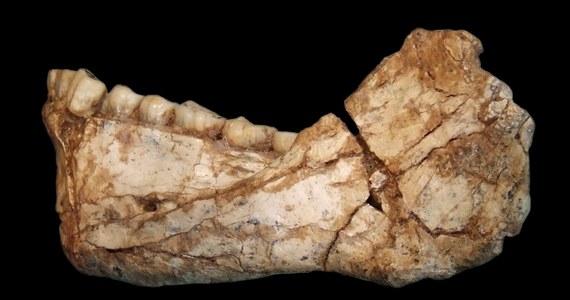 Na pustyni w Maroku znaleziono fragmenty ludzkich szkieletów, liczące 300 tysięcy lat. To odkrycie może sprawić, że historię człowieka trzeba będzie pisać od nowa. Szczątki z Afryki Północnej są starsze o 100 tysięcy lat od wcześniejszych odkryć archeologów, którzy badają rozwój homo sapiens.