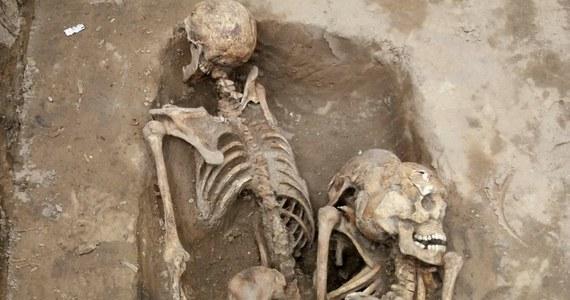 Najprawdopodobniej w środę archeolodzy Instytutu Pamięci Narodowej wydobędą z ziemi szczątki trzech osób, które odnaleziono w jamie grobowej na Łączce. Zdaniem historyków prowadzących poszukiwania na warszawskich Powązkach to 3 szkielety osób zamordowanych na początku lat 50. w więzieniu UB na Rakowieckiej. Badacze mówią o wyjątkowym znalezisku.