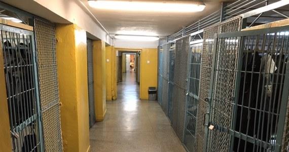 Prokuratura wszczęła śledztwo w sprawie molestowania trzech uczennic w specjalnym ośrodku szkolno-wychowawczym w Żywcu. Podejrzewany nauczyciel już nie pracuje.