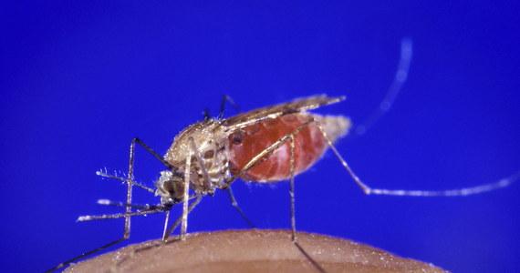 """Sztuczne światło może okazać się zaskakująco skutecznym sposobem zmniejszenia ryzyka ukąszenia przez komary - twierdzą na łamach czasopisma """"Parasites and Vectors"""" naukowcy z University of Notre Dame. Przekonują o tym wyniki badań prowadzonych przez nich na roznoszącym w Afryce malarię komarze z gatunku Anopheles gambiae. Już 10 minut naświetlania jasnym światłem w nocy skutecznie zakłócało rytm dobowy tych owadów i sprawiało, że przez kilka kolejnych godzin stawały się mniej uciążliwe."""