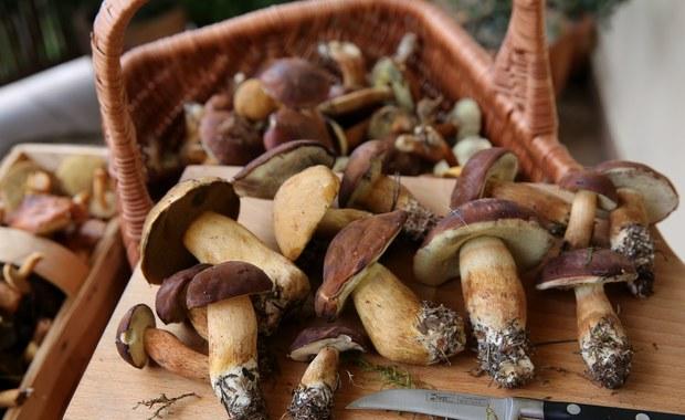 Niejadalne grzyby mają ostry smak. Można je zjeść po obróbce termicznej. To tylko niektóre z mitów krążących wśród grzybiarzy. A jaka jest prawda? Sprawdźcie sami.