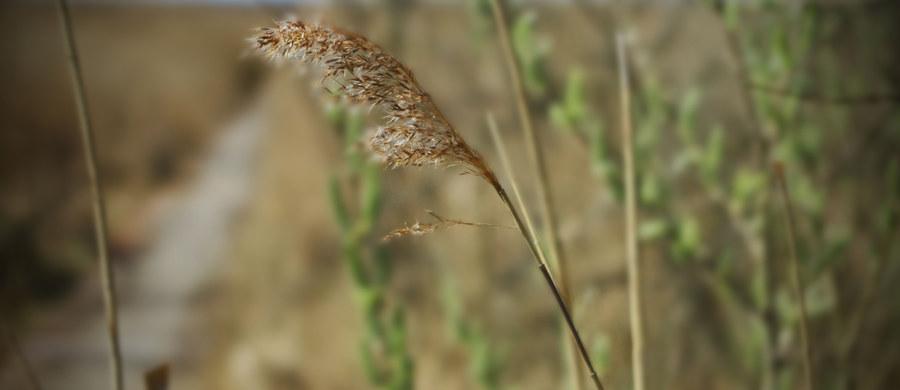 Na alergiczny nieżyt nosa cierpi 9 mln Polaków, a u połowy z nich przyczyną tej choroby jest alergia na pyłek roślin. Najczęściej uczula pyłek traw, następnie drzew - głównie brzozy oraz pyłek chwastów - szczególnie bylicy.