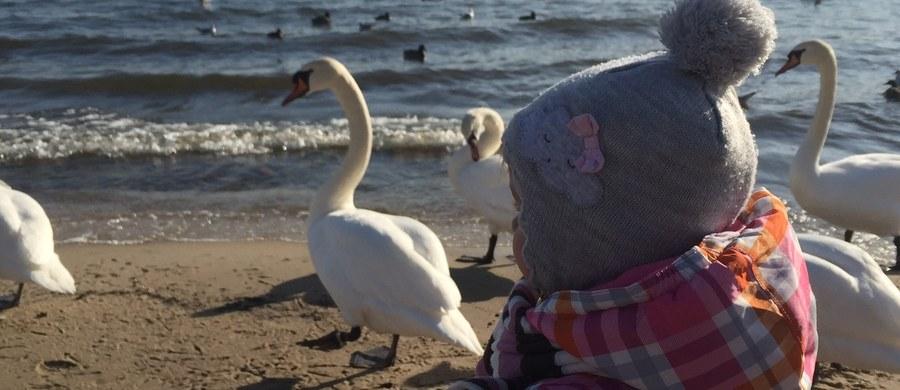 Diagnoza ADHD jest wiarygodna dopiero w późnym okresie przedszkolnym lub wczesnoszkolnym - mówi prof. Filip Rybakowski z Instytutu Psychiatrii i Neurologii w Warszawie, konsultant krajowy w dziedzinie psychiatrii dzieci i młodzieży. Jak podkreśla, rodzice mają kłopot z dostrzeżeniem czegoś niepokojącego w zachowaniu ich córki lub syna, bo nie mają porównania. Nawet jeżeli mają więcej niż jedno dziecko.