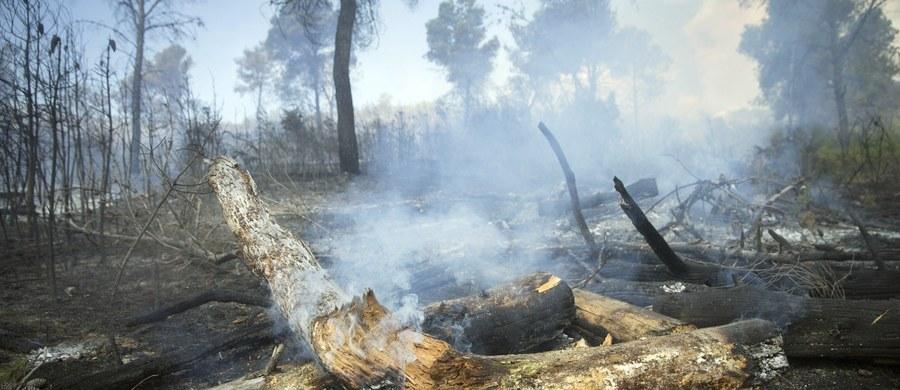 """Pożar lasu w zamkniętej strefie wokół nieczynnej elektrowni atomowej w Czarnobylu na północy Ukrainy został ugaszony - poinformowała ukraińska Państwowa Służba ds. Sytuacji Nadzwyczajnych. """"Dzięki zastosowaniu (strażackich) sił lądowych i lotniczych pożar został zlikwidowany 1 lipca o godzinie 13.25 (godz. 12.25 w Polsce)"""" - napisano w komunikacie."""