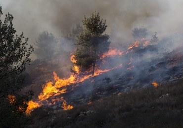 Pożary lasów w Chorwacji i Czarnogórze. Ewakuowano niektórych mieszkańców