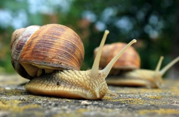 Skuteczne sposoby na ślimaki w ogrodzie!