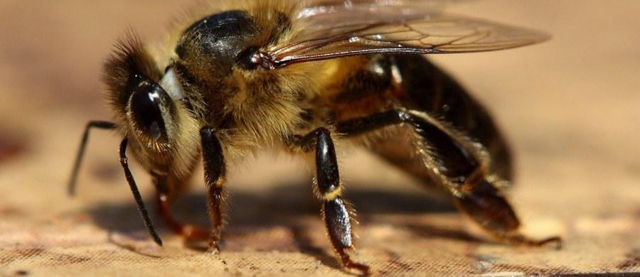 Coraz więcej z nas jest alergikami. Jesteśmy uczuleni na pyłki różnych roślin, na kurz i inne substancje. Nasz organizm na alergeny może reagować różnie, ale w skrajnym przypadku może dojść do wstrząsu anafilaktycznego. Czym on jest i jak się przed nim bronić?