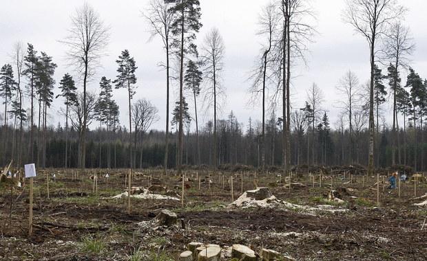 Listy z ostrzeżeniami przed prawną odpowiedzialnością i karami za wycinkę drzew w Puszczy Białowieskiej wysłali przedstawiciele Greenpeace Polska do trzech nadleśnictw działających na terenie Puszczy - informuje dziennikarz RMF FM Michał Dobrołowicz.