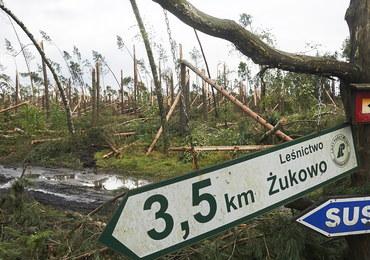 """""""Wichury nigdy dotąd nie wyrządziły w polskich lasach takich szkód"""""""