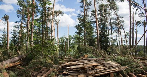 Uprzątnięcie terenów dotkniętych nawałnicami potrwa do 2019 r - powiedziała rzeczniczka Lasów Państwowych Anna Malinowska. Dodała, że potrzeba 80-100 lat, by na tych terenach z powrotem pojawił się dorosły las.