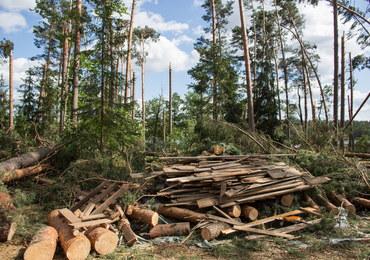 Lasy Państwowe: Uprzątnięcie terenów dotkniętych nawałnicami potrwa do 2019 roku