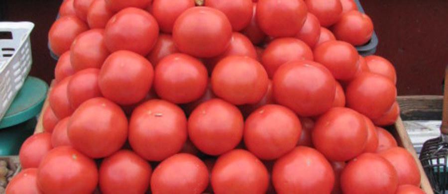 Genetycznie zmodyfikowane pomidory mogą pomóc w walce z chorobami układu krążenia. Naukowcy z Uniwersytetu Kalifornijskiego (UCLA) przedstawili podczas sesji American Heart Association w Los Angeles wyniki badań, wskazujące na skuteczność takich pomidorów w obniżaniu u myszy poziomu szkodliwego cholesterolu i łagodzeniu objawów arteriosklerozy.