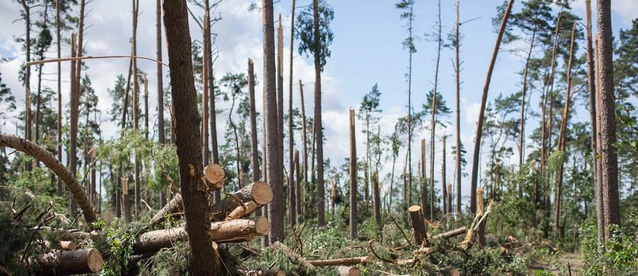 """Ponad miliard złotych - takie są straty finansowe w lasach zniszczonych w czasie weekendowych nawałnic i wichur, które przeszły nad Polską. Z szacunków Lasów Państwowych wynika, że żywioł uszkodził 45 tys. ha lasu. To o jedną piątą więcej, niż dotąd szacowano. Tzw. Stan siły wyższej o zasięgu ponadlokalnym będzie obowiązywał co najmniej do końca roku w lasach zniszczonych przez nawałnice – informuje dziennikarz RMF FM Michał Dobrołowicz. """"Mamy do czynienia z największą w dziejach polskiego leśnictwa klęską spowodowaną wiatrami o znamionach huraganu"""" - powiedział dyrektor generalny Lasów Państwowych Konrad Tomaszewski."""
