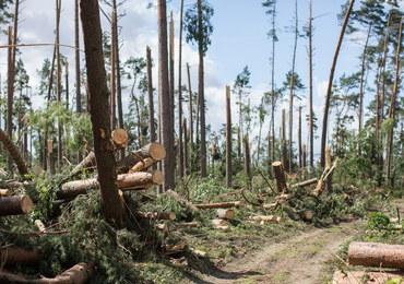 """Podano wysokość strat finansowych w lasach po nawałnicach. """"To największa tragedia od 1924 roku"""""""