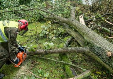 Najnowszy bilans strat w lasach po nawałnicach