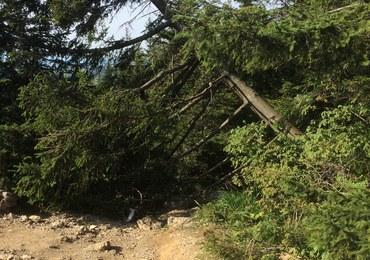 Wandal ściął drzewo na szczycie Nosala w Tatrach