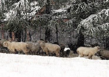 W Tatrach spadł śnieg! TOPR ostrzega: Jest bardzo zimno i ślisko