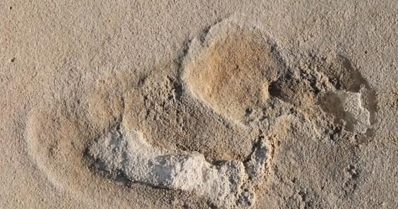 """Czy sensacyjne odkrycie polskich paleontologów zmieni naszą wiedzę o pochodzeniu człowieka? Badacze z Państwowego Instytutu Geologicznego - Państwowego Instytutu Badawczego oraz Uniwersytetu w Uppsali odkryli na skalistej plaży w Trachilos na zachodzie Krety prawdopodobne ślady naszych dalekich przodków. Wyniki badań, opublikowanych na łamach czasopisma """"Proceedings of the Geologists' Association"""", wskazują, że ślady pochodzą aż sprzed 5,7 milionów lat. Do tej pory wydawało się, że w tym czasie praludzie nie wychylali się jeszcze z Afryki, nowe odkrycie wskazuje, że mogli już wtedy żyć w Europie Wschodniej."""