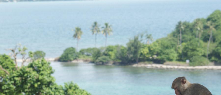 """Drapanie się tam, gdzie nie swędzi, ma większy sens, niż się na pierwszy rzut oka wydaje. Zdaniem naukowców z University of Portsmouth jest sygnałem społecznym i służy... łagodzeniu konfliktów. Przekonuje o tym w najnowszym numerze czasopismo """"Scientific Reports"""". Badania prowadzone w kolonii rezusów na wyspie w Portoryko pokazały, że drapanie się nie musi służyć uśmierzaniu swędzenia, może być sygnałem nerwowości i stresu, który zniechęca inne osobniki do zaczepek i pozwala uniknąć scysji. Autorzy pracy przekonują, że ta funkcja może być u ssaków naczelnych uniwersalna i podobnie działa także u ludzi."""