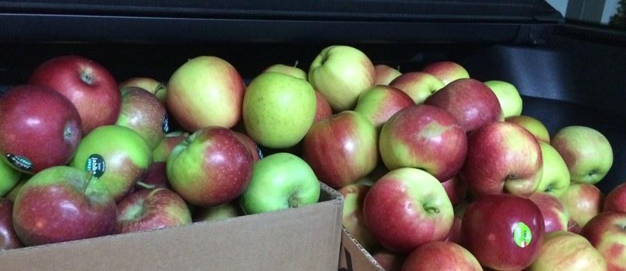 W tym roku mniej będzie na rynku jabłek, gruszek i śliwek, a to oznacza dla konsumentów wyższe ceny. Dużo jest natomiast warzyw i grzybów - podała rzecznik rynku hurtowego w Broniszach Małgorzata Skoczewska.