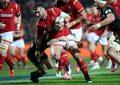 Rugbysta Scott Baldwin ugryziony przez lwa