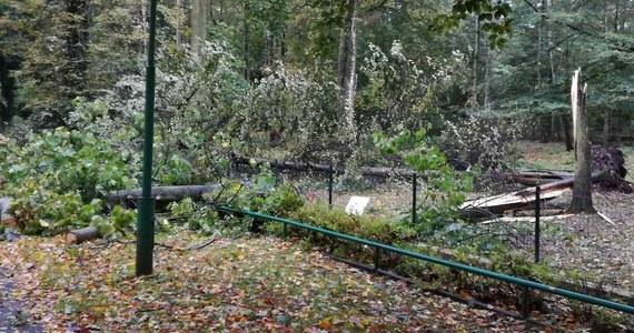 W trakcie wichury żadnemu ze zwierząt nic się nie stało, ale straty są ogromne - powiedziała dyrektorka poznańskiego zoo Ewa Zgrabczyńska. Z powodu usuwania skutków nawałnicy ogród zoologiczny został zamknięty do odwołania.