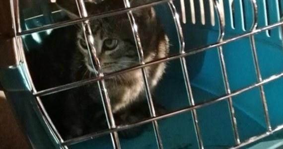 Nietypowa interwencja tyskich strażaków. Mundurowi uratowali kotka, który utknął pod maską zaparkowanej osobówki. Zwierzak trafił pod opiekę weterynarza.