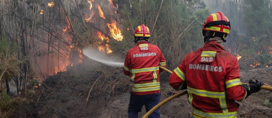 Policja w Hiszpanii i Portugalii natrafiła na dowody świadczące, że kilkaset pożarów, które od niedzieli doprowadziły w obu krajach do śmierci 40 osób, wybuchło w następstwie celowego podłożenia ognia przez zorganizowane grupy przestępcze.