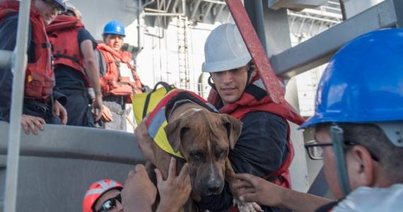 Dwie kobiety dryfowały na swoim jachcie po Pacyfiku od pięciu miesięcy. Właśnie zostały uratowane przez amerykańską marynarkę – one , a także ich dwa psy.