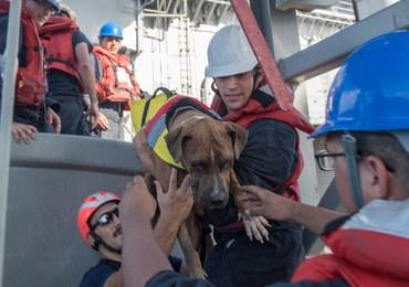 Pięć miesięcy dryfowały po oceanie. Marynarka uratowała dwie żeglarki i ich czworonożnych towarzyszy