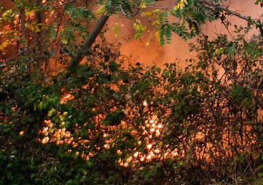 W walkę z pożarami w Portugalii włączyli się żołnierze