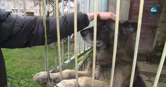 Sądowy wyrok ws. szczekającego psa. Mieszkańcy Granowa w woj. zachodniopomorskim muszą pozbyć się swojego czworonoga. Według jednego z sąsiadów zwierzę jest za głośne. Wyrok jest prawomocny.