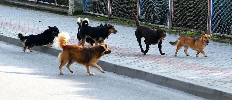 Kara więzienia grozi mieszkance lubelskiej gminy Trzydnik Duży. Na posesji Małgorzaty H. policjanci znaleźli dwa martwe psy uwięzione na łańcuchach. Według wstępnych ustaleń, zwierzęta zostały zagłodzone na śmierć.