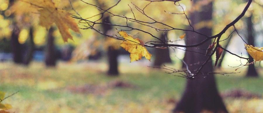 Prokuratura i policja z Kłodzka na Dolnym Śląsku wyjaśniają okoliczności śmierci mężczyzny, którego zwłoki zawinięte w dywan znaleziono wczoraj w parku na obrzeżach miasta. Ze wstępnych informacji wynika, że ciało mogło przeleżeć w niewielkim wgłębieniu nawet kilka miesięcy. Do wyjaśnienia zatrzymano w tej sprawie trzy osoby.