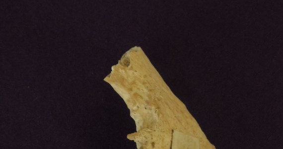 Uczeni z uniwersytetu w Oxfordzie przeprowadzili badanie szczątków św. Mikołaja, Od XI wieku jego relikwie znajdują się w kościołach.