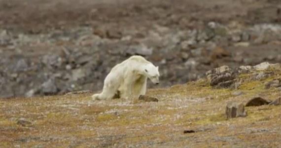 Grupa filmowców udostępniła wideo, po którym serce się kraje. Widać na nim, jak wygłodniały niedźwiedź polarny, ledwo się poruszający, próbuje znaleźć jedzenie na wysypisku.