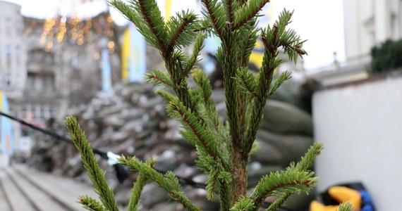 Wraz z naszym świątecznym konwojem zawitaliśmy do Olsztyna. Choinki rozdawaliśmy na ulicy Prostej. Czekało tam na Was tysiąc drzewek!