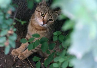 Jest sądowy finał historii kota, który zjadł rybki sąsiada i brudził w ogrodzie