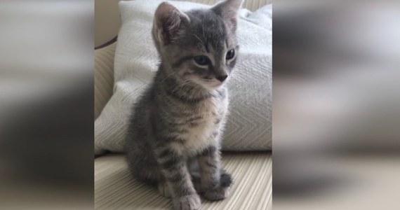 Ten kot podjął niezwykle trudną walkę ze… snem. Czy uda mu się pokonać senność? Przekonajcie się sami.