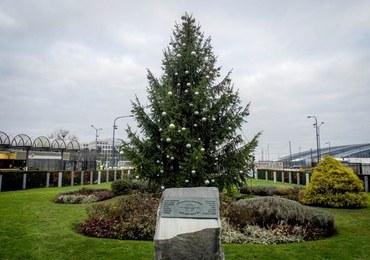 NATO ma dwie choinki. Co symbolizują świąteczne drzewka?